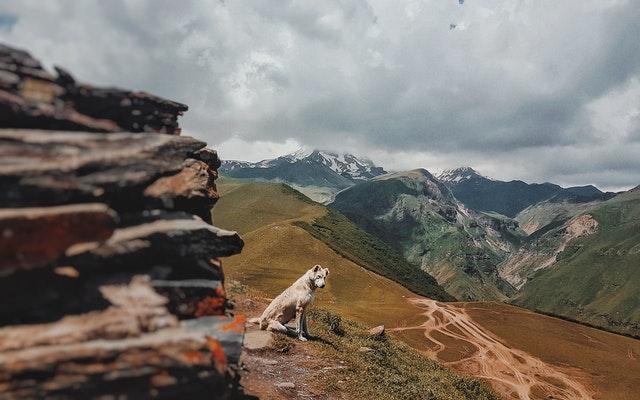 Príroda, pes